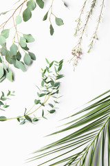 Different plants on white background