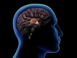Profile of Man with Thalamus Highlighted in Brain
