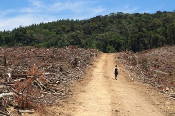Deforestation concept image consisting of forestry trees that have been felled. Photo taken near Stutterheim, South Africa.