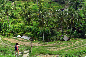 Tourist girl at Tegalalang Rice Terraces, one of the famous touristic places in Bali Island, Indonesia