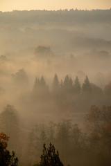 Fond de hotte en verre imprimé Matin avec brouillard Forest in morning fog