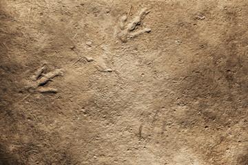 Real Dinosaur fossil Imprint, Dinosaur footprint
