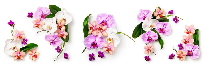 Deurstickers Orchidee Orchid flower set