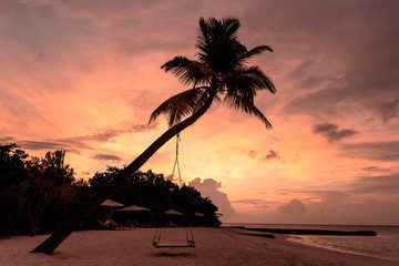 Picture of a palm tree and a swing during sunset