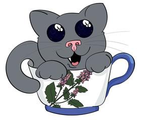 Mystified Kitten in a Teacup