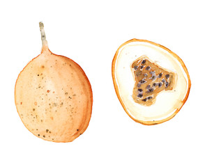 Hand drawn watercolor sketch illustration of granadilla and granadilla in section isolated on white art