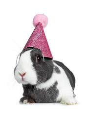 Cute grey with white European rabbit, wearing a pink glitter hat with pompom.  Looking at camera facing side. Isolated on white background.