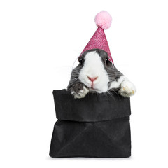 Cute grey with white European rabbit, wearing a pink glitter hat with pompom. Sitting in a black paper bag with front paws over edge. Looking at camera facing front. Isolated on white background.