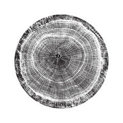 Wood textured surface of wavy ring pattern from a slice of tree. Grayscale wooden stump isolated on white.