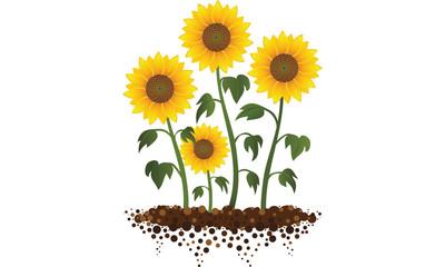 Sunflower Garden Illustration