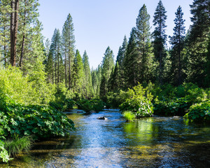 Photo Blinds Forest river McCloud River flowing through Shasta National Forest, Siskiyou County, Northern California