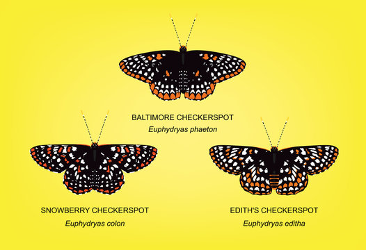 Butterfly Checkerspot Set Vector Illustration