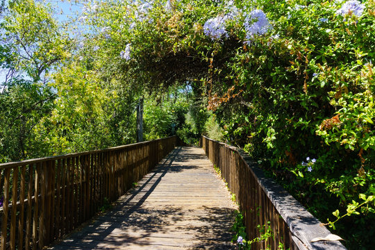 Wooden boardwalk, part of the Los Gatos Creek trail in the town of Los Gatos, south San Francisco bay area