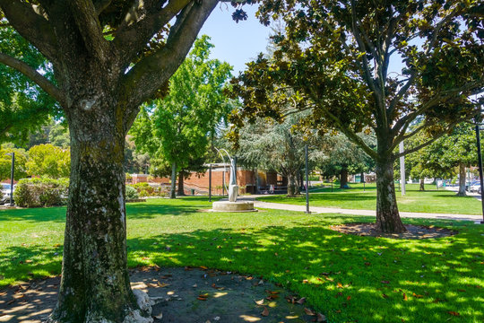 Beautiful public park with mature Magnolia trees in downtown Los Gatos, close to the Civic Center, south San Francisco bay area, California
