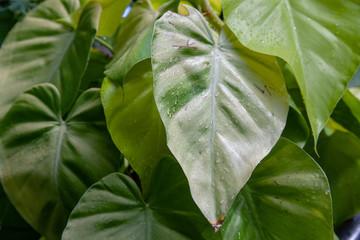 Jungle Leaves