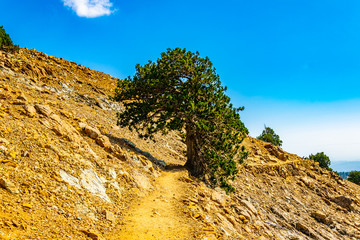 Hiking track at Troodos mountains on Cyprus