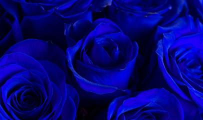 Close Up View of Royal Blue Roses
