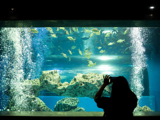 Woman taking a photo of fish in the aquarium