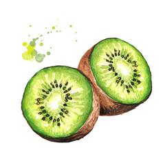 Ripe kiwi fruit. Watercolor hand drawn illustration  isolated on white background