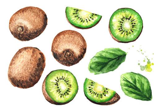 Kiwi fruit set. Watercolor hand drawn illustration  isolated on white background