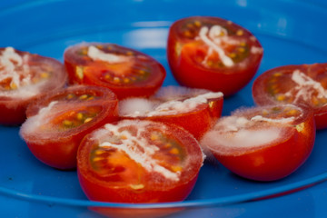 tomatoes covered with mold