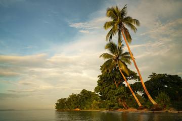 Palm tree in Rabaul