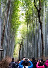 Bamboo Forest, Arashiyama, Kyoto, Japan November 16, 2017; a popular ecological destination where unidentified tourists taking photos in this famous and spectacular spot.