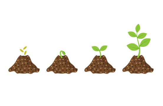 Stages of growth seeds, sprout, plant