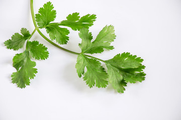 close up of green leaves of coriander or Chinese parsley use a lot in Asia cuisne.