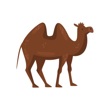 Brown camel with two humps on the back, side view. Desert mammal animal. Flat vector element for children book