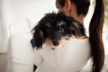 飼い主の肩に頭を乗せてカメラ目線の犬