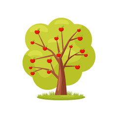 Flat vector icon of big green tree with red apples. Natural landscape element. Farm garden theme