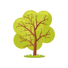Large tree with bright green leaves. Agricultural plant. Natural landscape element. Farming theme. Flat vector design