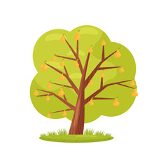 Large green tree with ripe orange pears. Agricultural plant. Landscape element. Organic farm product. Flat vector icon