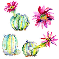 Green cactus. Floral botanical flower. Wild spring leaf wildflower isolated.