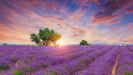 Lavender field - Valensole, France Wall mural