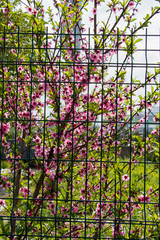 Flowers bloom in the spring in trees