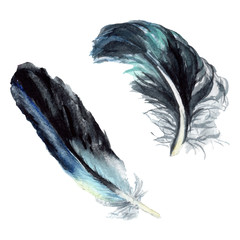 Black feather. Watercolor background illustration set. Isolated feather illustration element.
