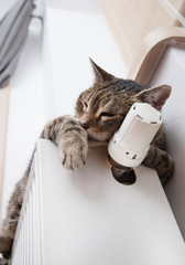 Heating Radiator and cat
