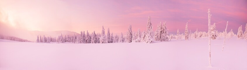 Beautiful winter landscape, trees covered with snow.