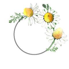 Chamomile floral botanical flower. Watercolor background illustration set. Frame border ornament square.