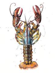 Splashy Lobster Watercolour Illustration