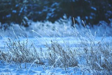 winter landscape, snow forest