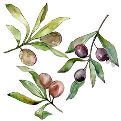 Black olives watercolor background set. Watercolour drawing fashion aquarelle. Isolated olives illustration element.