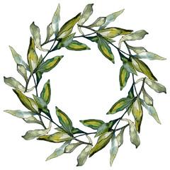 Black olives watercolor background illustration set. Watercolour drawing aquarelle green leaf. Frame border square.