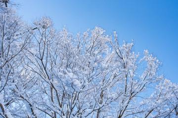 枝に積もった雪