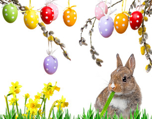 little baby rabbit eating a grass and easter eggs
