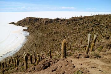 Incredible view from Isla Incahuasi (Isla del Pescado) rocky outcrop full of Cactus Located in the Center of Uyuni Salt Flats, Bolivia, South America