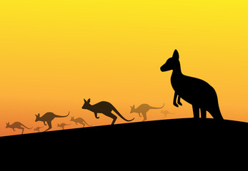 Group of kangaroos in desert, silhouette vector
