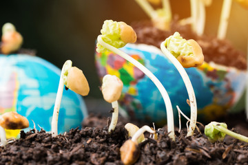 young plants seeding growing on globe world model and fertile soil for agriculture in garden. Agriculture for learning and save green world concept.
